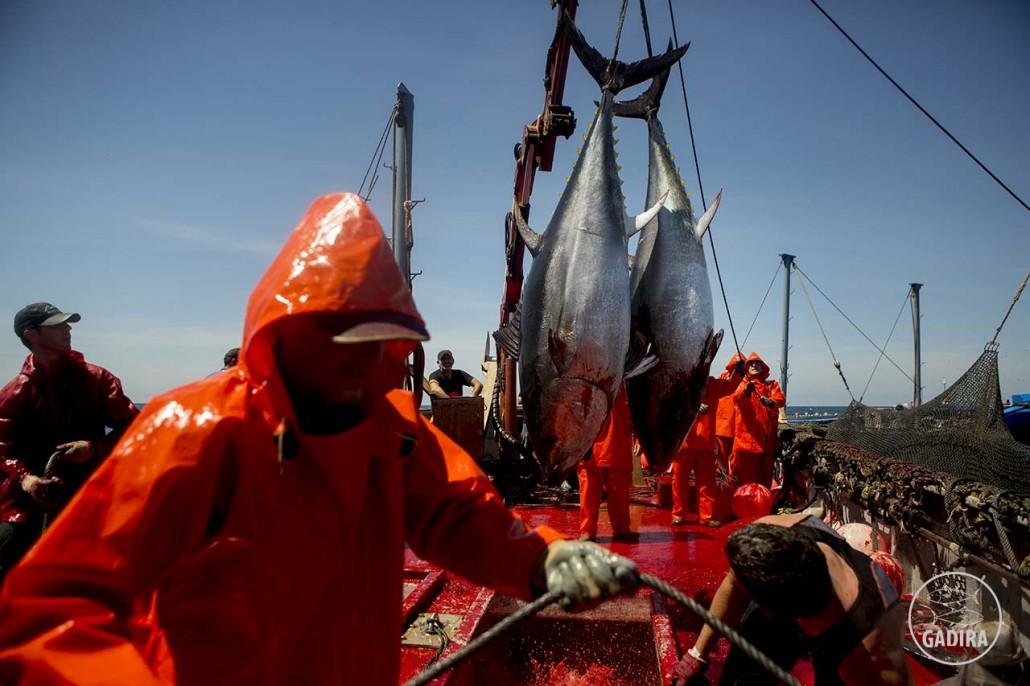 Levantá 2015 - GadiraAlmadrabas Gadira en plena faena pesquera