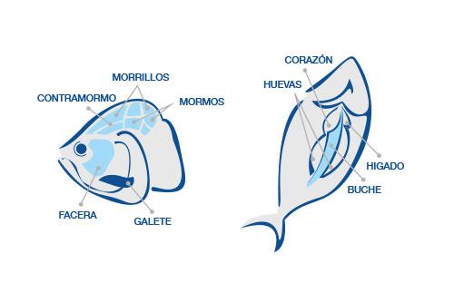 Despiece de la cabeza del atún rojo de almadraba