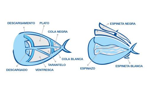 Despiece de los lomos del atún rojo de almadraba