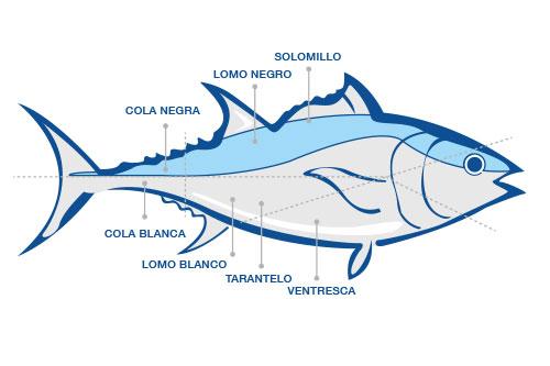 Despiece del atún rojo de almadraba